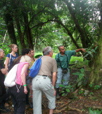Regenwaldwanderung mit Guide