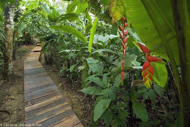 Auf dem Weg in den Dschungel