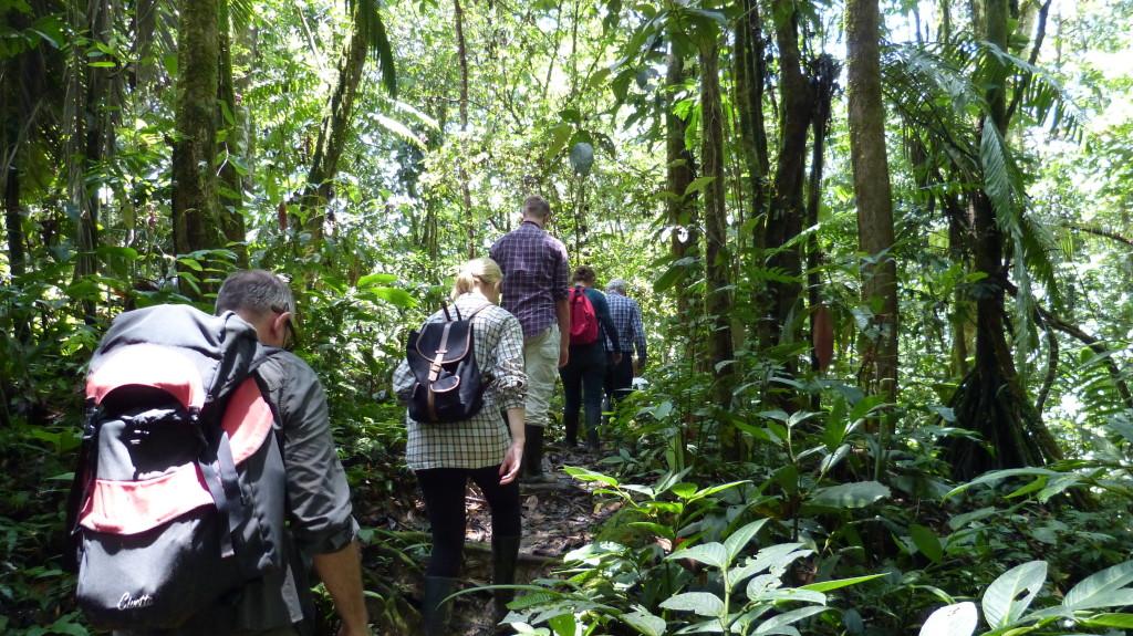 Zu den Programmen der Hakuna Matata Lodge gehören auch Urwaldwanderungen.