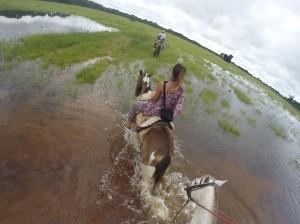 Nordpantanal Pferd Cuiaba